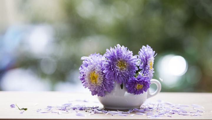 Beautiful pink aster flowers in a small mug